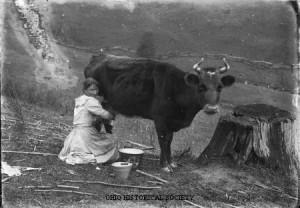milking-18901