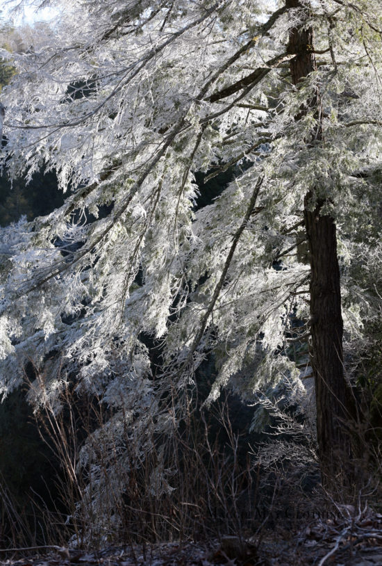 Fall Creek Falls Frost