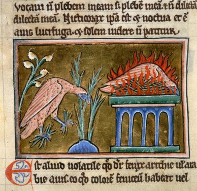 Ancient Phoenix
